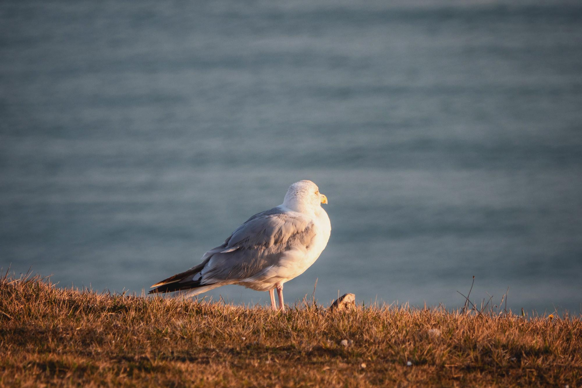 Wildlife Spotting image