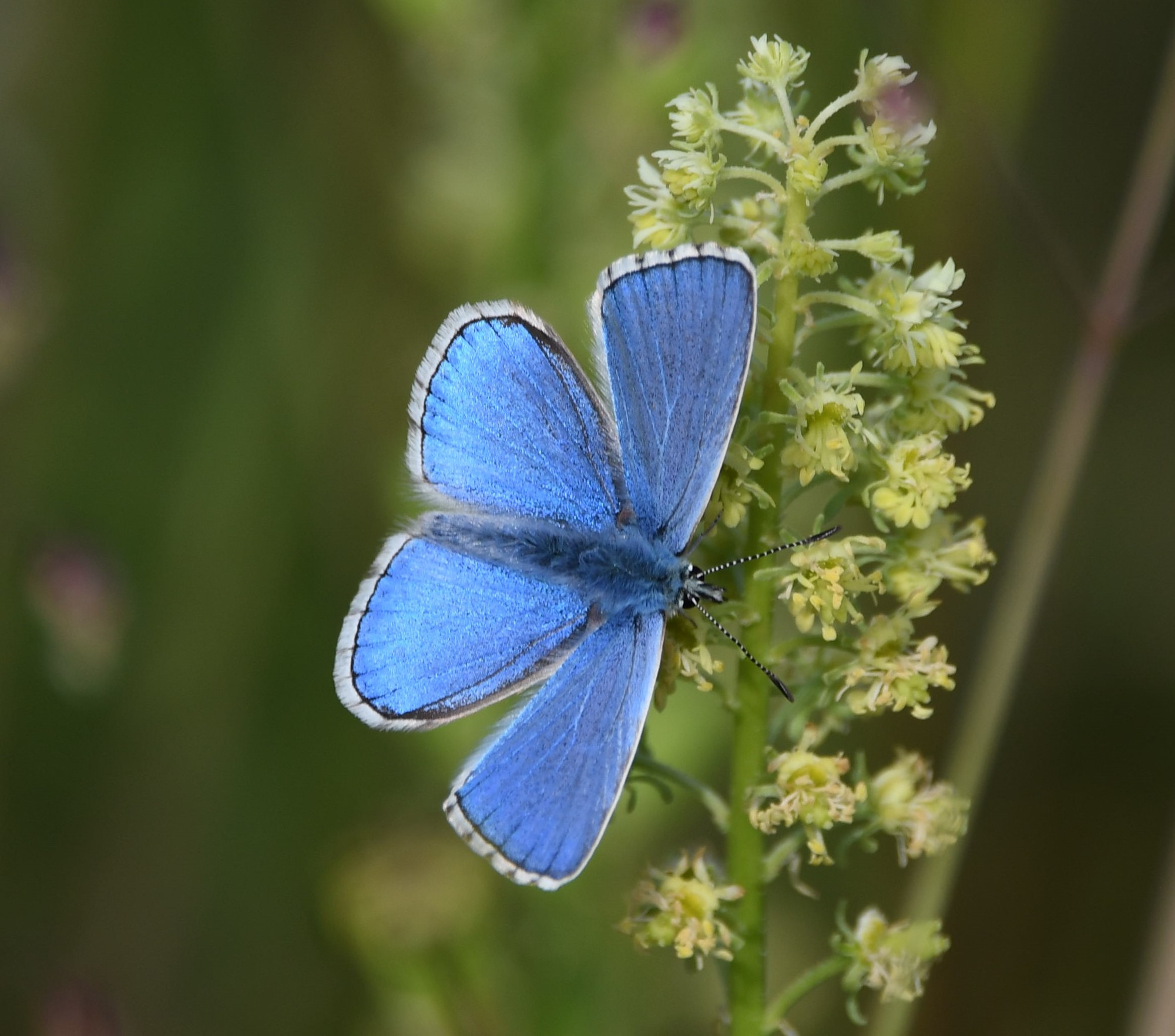 Nature spotting this spring and summer at Seven Sisters image